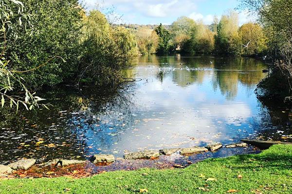 Meadowbank Park - Park Details